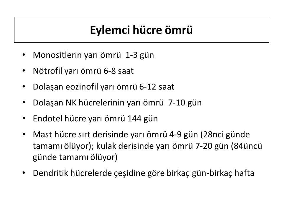 Eylemci hücre ömrü Monositlerin yarı ömrü 1-3 gün Nötrofil yarı ömrü 6-8 saat Dolaşan eozinofil yarı ömrü 6-12 saat Dolaşan NK hücrelerinin yarı ömrü 7-10 gün Endotel hücre yarı ömrü 144 gün Mast hücre sırt derisinde yarı ömrü 4-9 gün (28nci günde tamamı ölüyor); kulak derisinde yarı ömrü 7-20 gün (84üncü günde tamamı ölüyor) Dendritik hücrelerde çeşidine göre birkaç gün-birkaç hafta