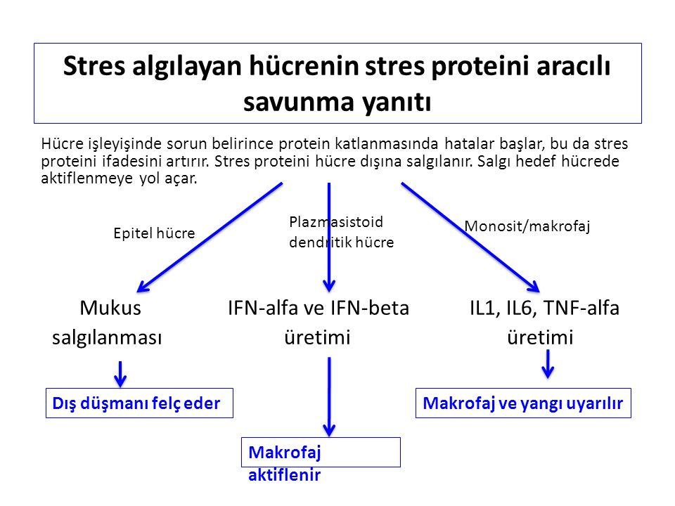  Proinflamatuvar sitokinler: IL1, IL6, TNF-α (endotel geçirgenliği artar, ateş ayarı değişir)  Kemokinler: IL-8, C5a'nın etkisi (kandan lökosit çağrılır)  Stres yanıtını aktifleyici: INF-α ve INF-β (tip-1 interferonlar)  Anafilatoksinler: C5a, C3a, C4a (endotel geçirgenliği artar)  Akut Faz Proteinleri: Ateş ayarını arttırarak bakterinin demir kullanımına engel olur  Sinir sitemine bilgi vericiler: Bradikinin ile ağrı, histamin ile kaşıntı  Pıhtılaşma-Fibrinolitik Sistem: Trombin salınımıyla tromosit, fibrinojen ve eritrosit yırtılan damardan sıvı kaçağını önleyen tıkaç üretir, plasminojen sistemiyle fazla tıkaç yıkılır  Vasküler aminler: Histamin, PAF, vb..