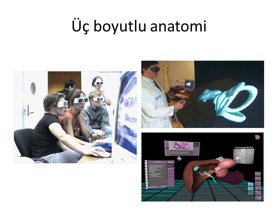 Üç boyutlu anatomi