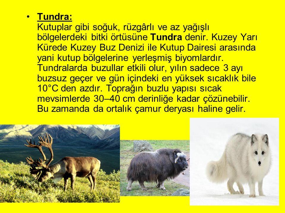 Tundra: Kutuplar gibi soğuk, rüzgârlı ve az yağışlı bölgelerdeki bitki örtüsüne Tundra denir. Kuzey Yarı Kürede Kuzey Buz Denizi ile Kutup Dairesi ara