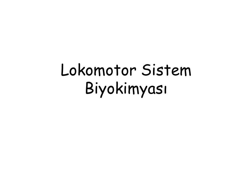 Böbrekte meydana gelen hidroksilasyon (1- hidroksilaz), PTH tarafından ve ayrıca hipofosfatemi durumunda indüklenir.