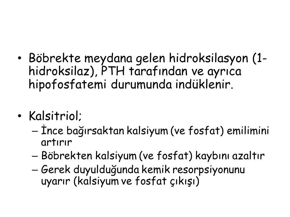 Böbrekte meydana gelen hidroksilasyon (1- hidroksilaz), PTH tarafından ve ayrıca hipofosfatemi durumunda indüklenir. Kalsitriol; – İnce bağırsaktan ka