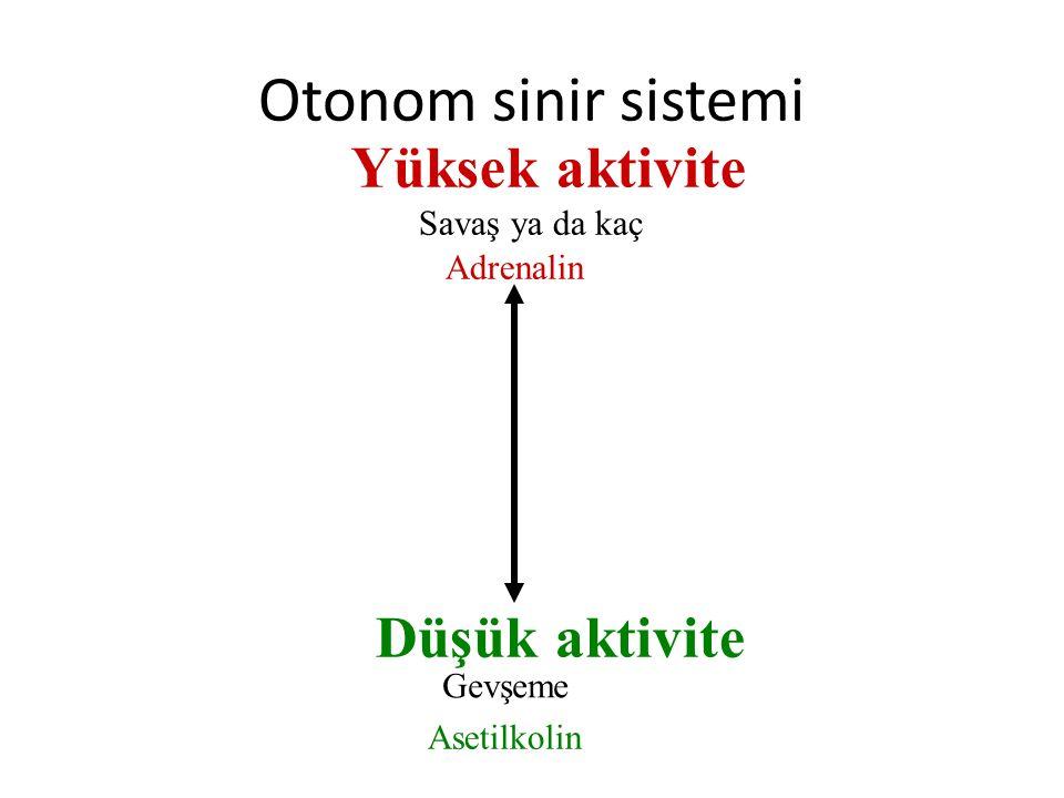 Yüksek aktivite Düşük aktivite Savaş ya da kaç Adrenalin Gevşeme Asetilkolin Otonom sinir sistemi