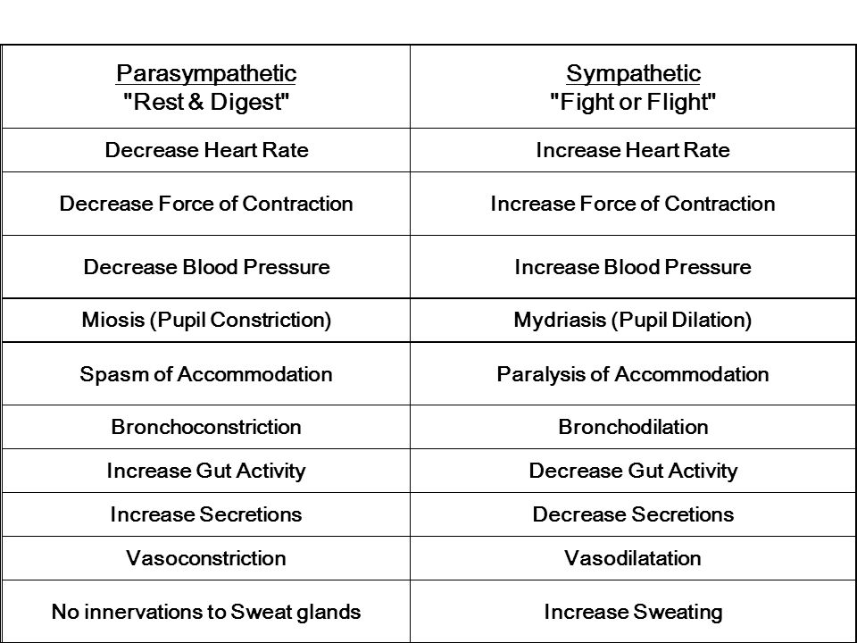 Parasympathetic Rest & Digest Sympathetic Fight or Flight Decrease Heart RateIncrease Heart Rate Decrease Force of ContractionIncrease Force of Contraction Decrease Blood PressureIncrease Blood Pressure Miosis (Pupil Constriction)Mydriasis (Pupil Dilation) Spasm of AccommodationParalysis of Accommodation BronchoconstrictionBronchodilation Increase Gut ActivityDecrease Gut Activity Increase SecretionsDecrease Secretions VasoconstrictionVasodilatation No innervations to Sweat glandsIncrease Sweating