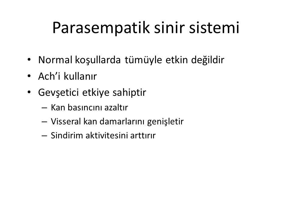 Parasempatik sinir sistemi Normal koşullarda tümüyle etkin değildir Ach'i kullanır Gevşetici etkiye sahiptir – Kan basıncını azaltır – Visseral kan damarlarını genişletir – Sindirim aktivitesini arttırır
