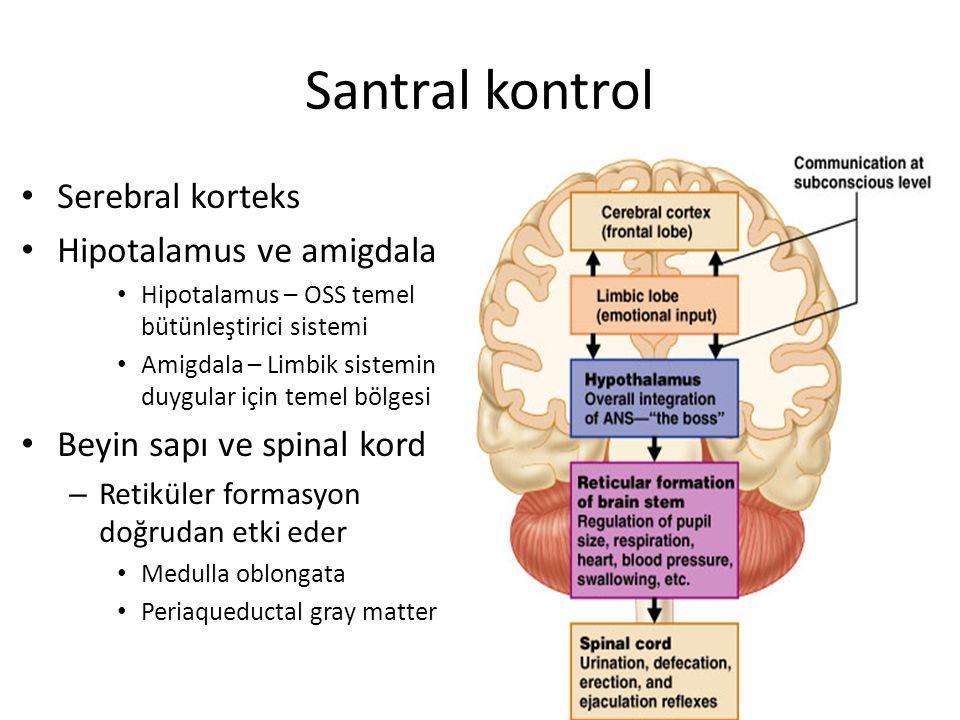 Santral kontrol Serebral korteks Hipotalamus ve amigdala Hipotalamus – OSS temel bütünleştirici sistemi Amigdala – Limbik sistemin duygular için temel bölgesi Beyin sapı ve spinal kord – Retiküler formasyon doğrudan etki eder Medulla oblongata Periaqueductal gray matter