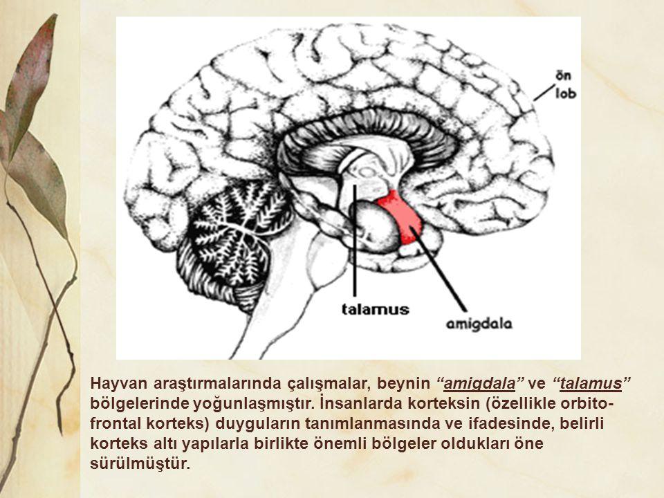 """Hayvan araştırmalarında çalışmalar, beynin """"amigdala"""" ve """"talamus"""" bölgelerinde yoğunlaşmıştır. İnsanlarda korteksin (özellikle orbito- frontal kortek"""
