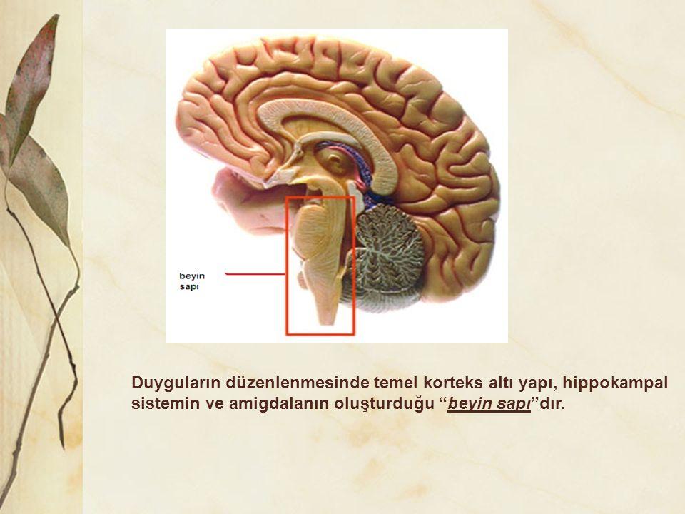 """Duyguların düzenlenmesinde temel korteks altı yapı, hippokampal sistemin ve amigdalanın oluşturduğu """"beyin sapı""""dır."""