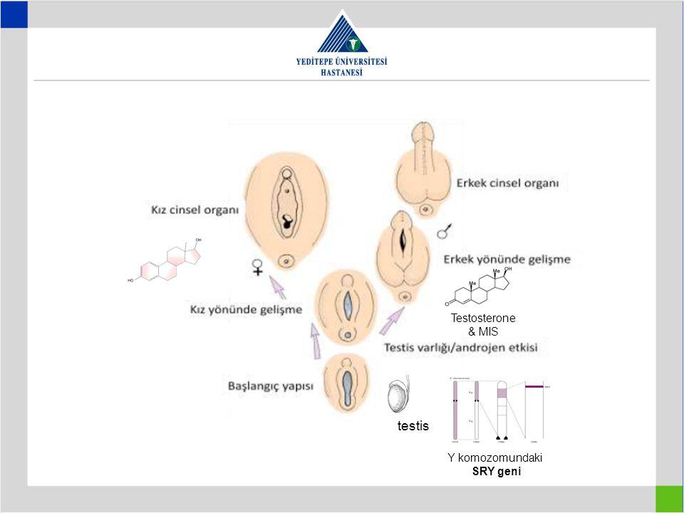 Y komozomundaki SRY geni Testosterone & MIS testis