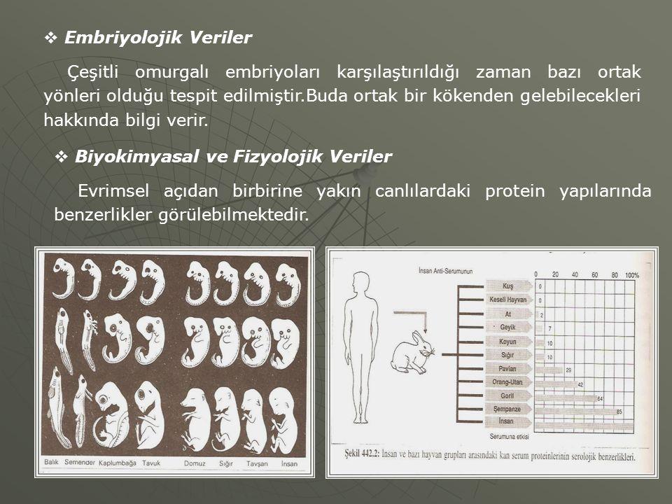  Embriyolojik Veriler Çeşitli omurgalı embriyoları karşılaştırıldığı zaman bazı ortak yönleri olduğu tespit edilmiştir.Buda ortak bir kökenden gelebi