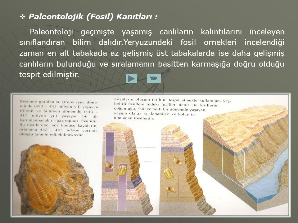  Paleontolojik (Fosil) Kanıtları : Paleontoloji geçmişte yaşamış canlıların kalıntılarını inceleyen sınıflandıran bilim dalıdır.Yeryüzündeki fosil ör