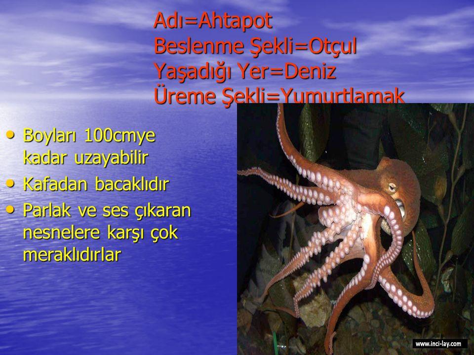 Adı=Yunus Beslenme Şekli=Etçil Yaşadığı Yer=Deniz Üreme Şekli=Doğurmak Adı=Yunus Beslenme Şekli=Etçil Yaşadığı Yer=Deniz Üreme Şekli=Doğurmak Hayvanların en zekisi olduğu kabul edilir 10 milyon yıl önce miyosen devrinde ortaya çıkmıştır Genellikle balık ve mürekkep balığı ile beslenirler