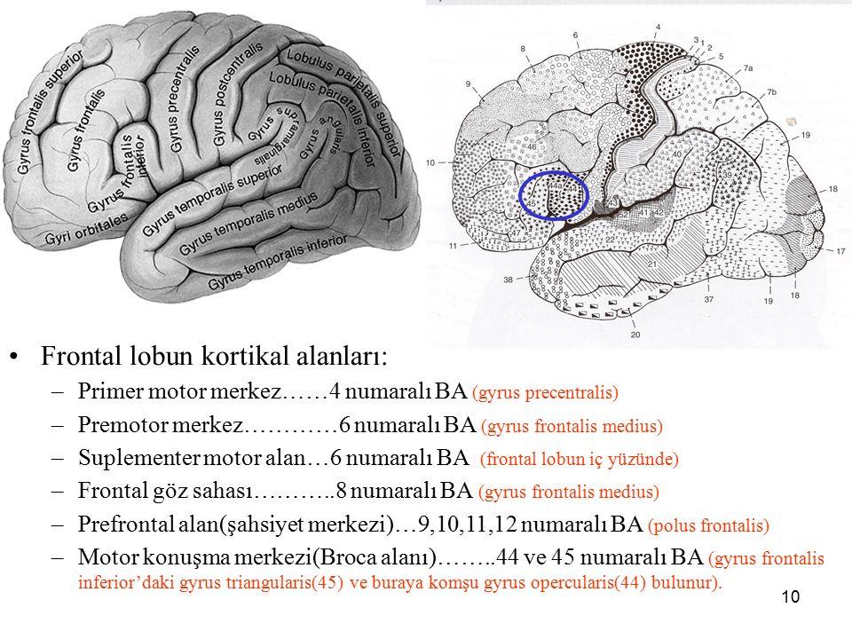 10 a Frontal lobun kortikal alanları: –Primer motor merkez……4 numaralı BA (gyrus precentralis) –Premotor merkez…………6 numaralı BA (gyrus frontalis medi