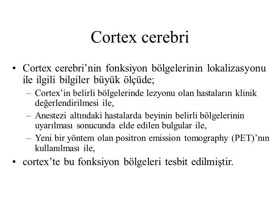 Cortex cerebri Cortex cerebri'nin fonksiyon bölgelerinin lokalizasyonu ile ilgili bilgiler büyük ölçüde; –Cortex'in belirli bölgelerinde lezyonu olan