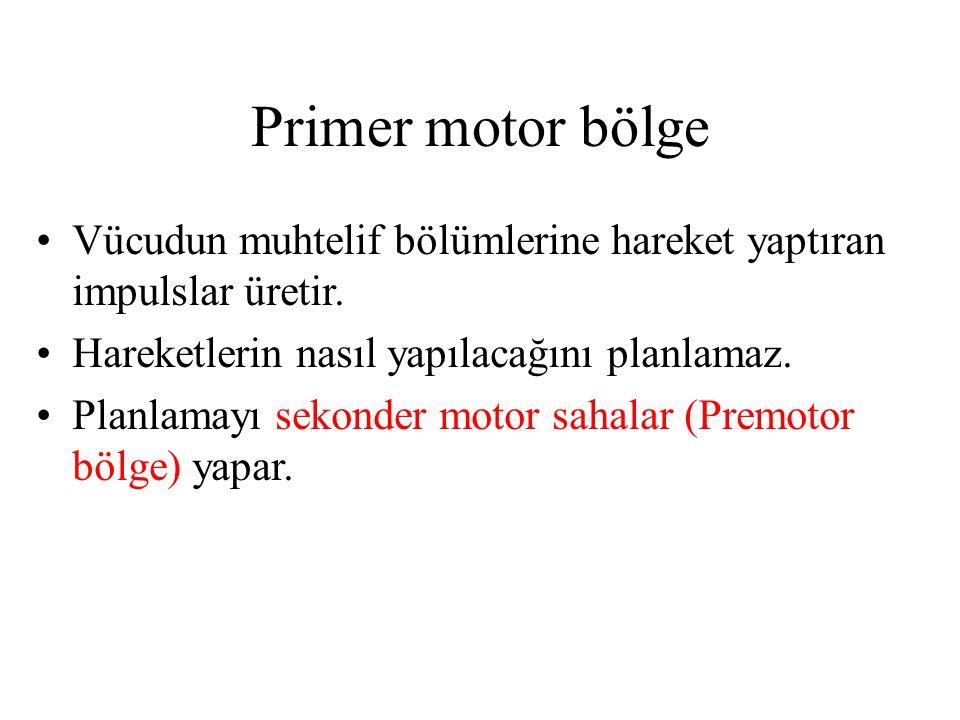 Primer motor bölge Vücudun muhtelif bölümlerine hareket yaptıran impulslar üretir. Hareketlerin nasıl yapılacağını planlamaz. Planlamayı sekonder moto
