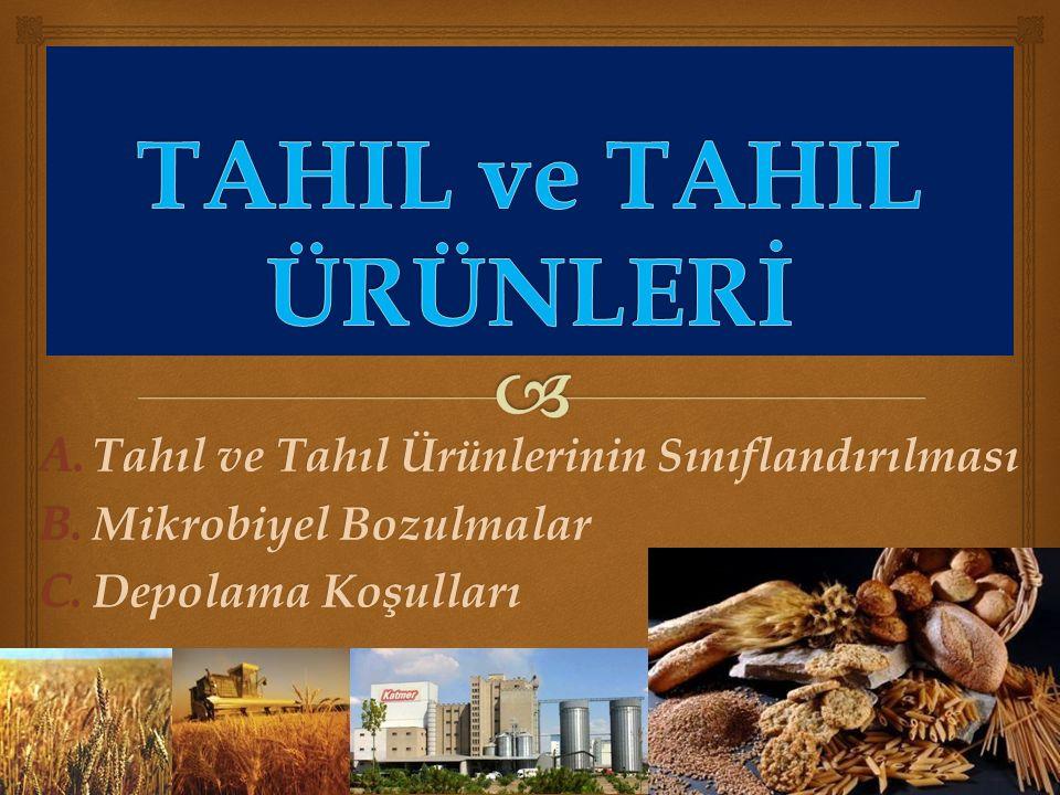  Graminiae  Tahıl, Graminiae familyasının tohumları olan buğday, çavdar, mısır, pirinç, yulaf, darı, arpa gibi danelerin tümünü ifade eder.