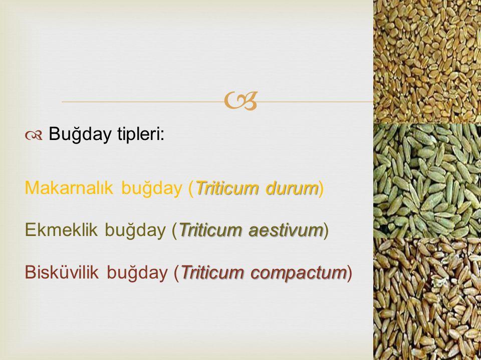  Buğday tipleri: Triticum durum Makarnalık buğday (Triticum durum) Triticum aestivum Ekmeklik buğday (Triticum aestivum) Triticum compactum Bisküvi