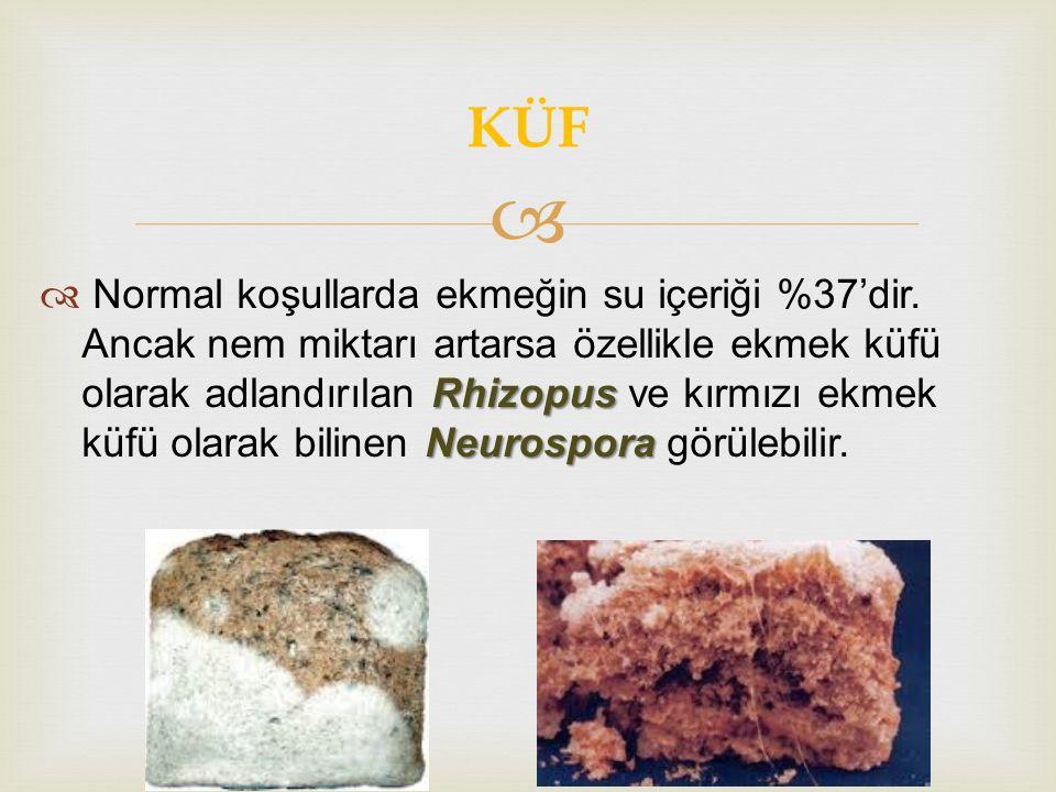  Rhizopus Neurospora  Normal koşullarda ekmeğin su içeriği %37'dir. Ancak nem miktarı artarsa özellikle ekmek küfü olarak adlandırılan Rhizopus ve k