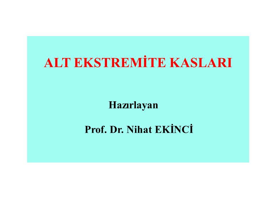 ALT EKSTREMİTE KASLARI Hazırlayan Prof. Dr. Nihat EKİNCİ