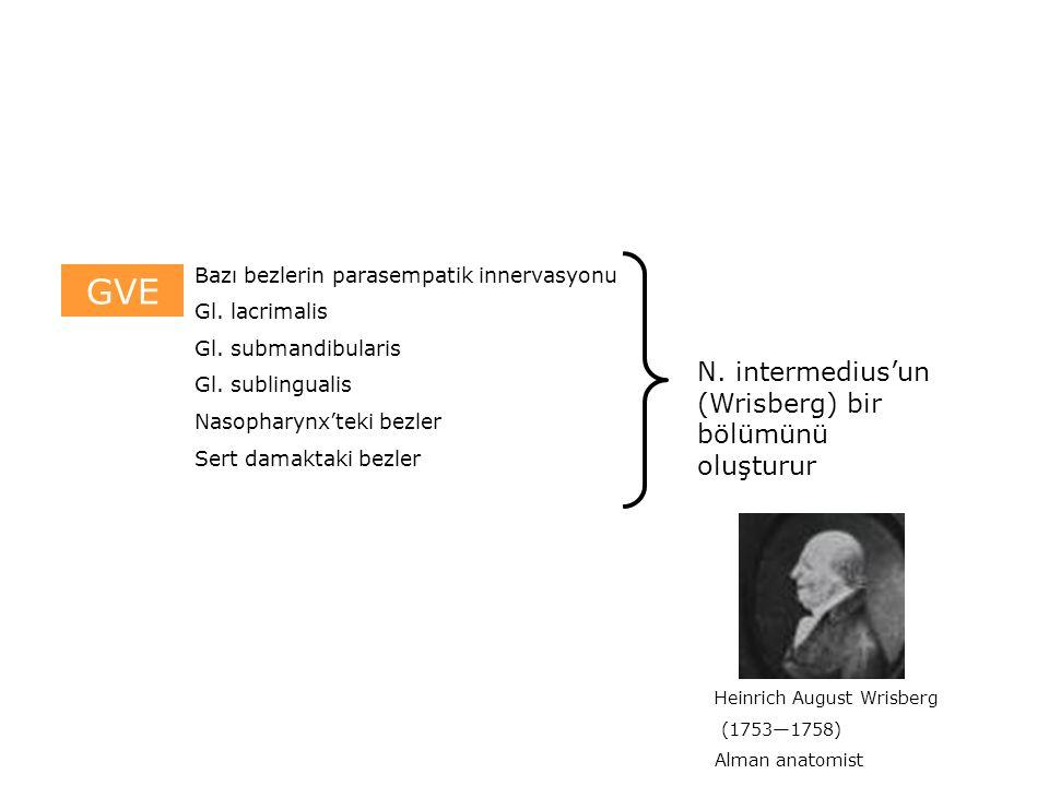 GVE Bazı bezlerin parasempatik innervasyonu Gl. lacrimalis Gl.