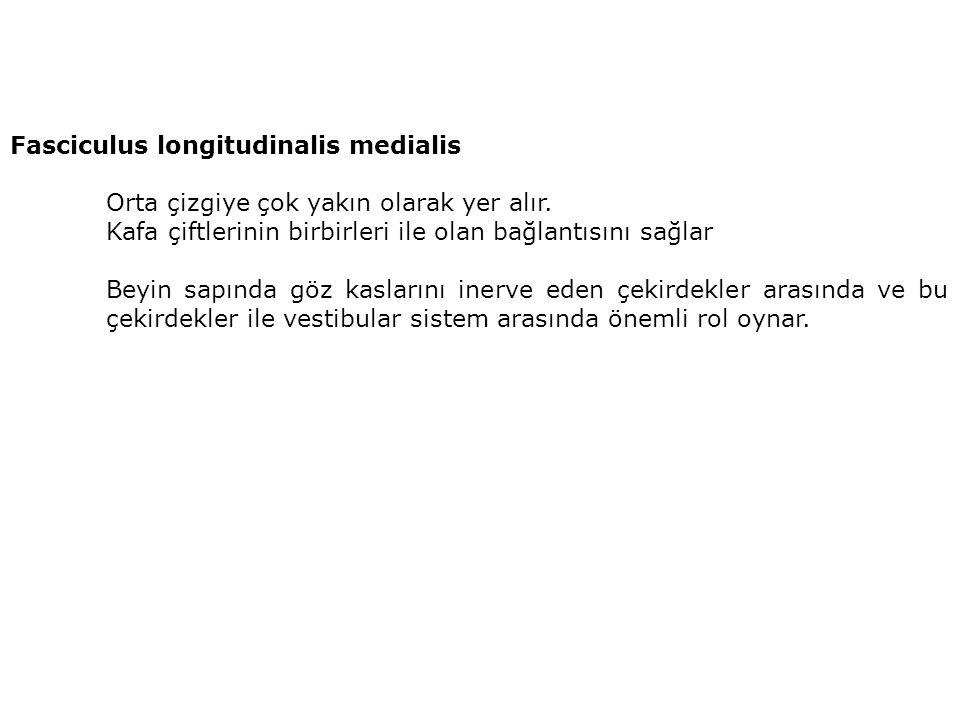 Fasciculus longitudinalis medialis Orta çizgiye çok yakın olarak yer alır.
