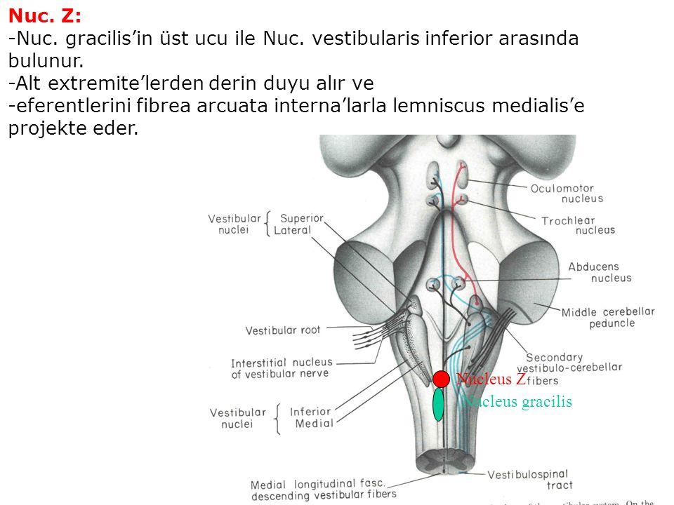 Nuc. Z: -Nuc. gracilis'in üst ucu ile Nuc. vestibularis inferior arasında bulunur.