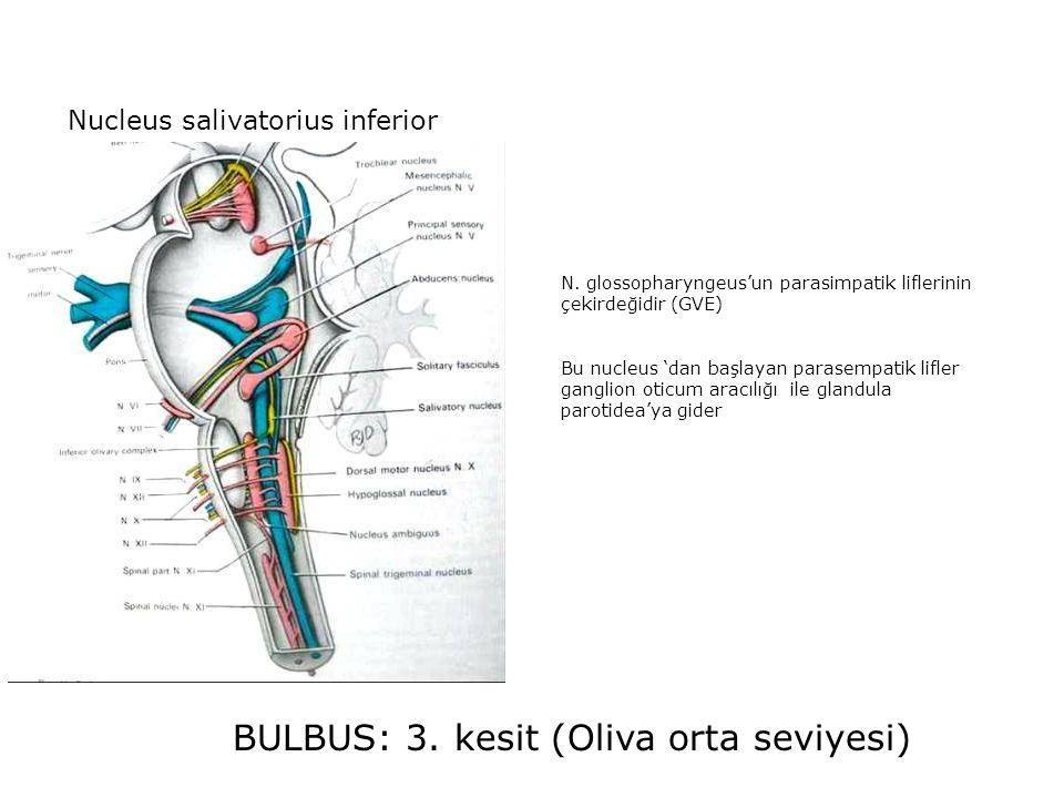 BULBUS: 3. kesit (Oliva orta seviyesi) Nucleus salivatorius inferior N.
