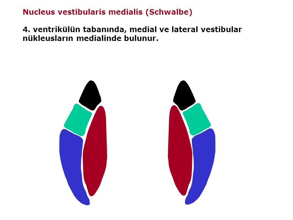 Nucleus vestibularis medialis (Schwalbe) 4.