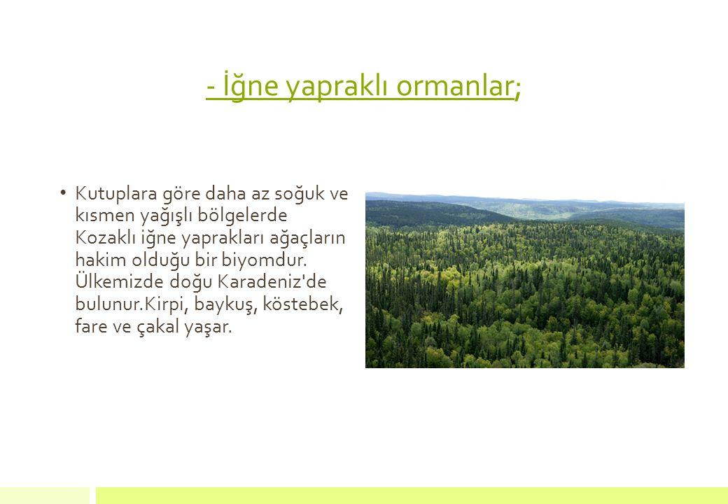 - İğne yapraklı ormanlar; Kutuplara göre daha az soğuk ve kısmen yağışlı bölgelerde Kozaklı iğne yaprakları ağaçların hakim olduğu bir biyomdur. Ülkem