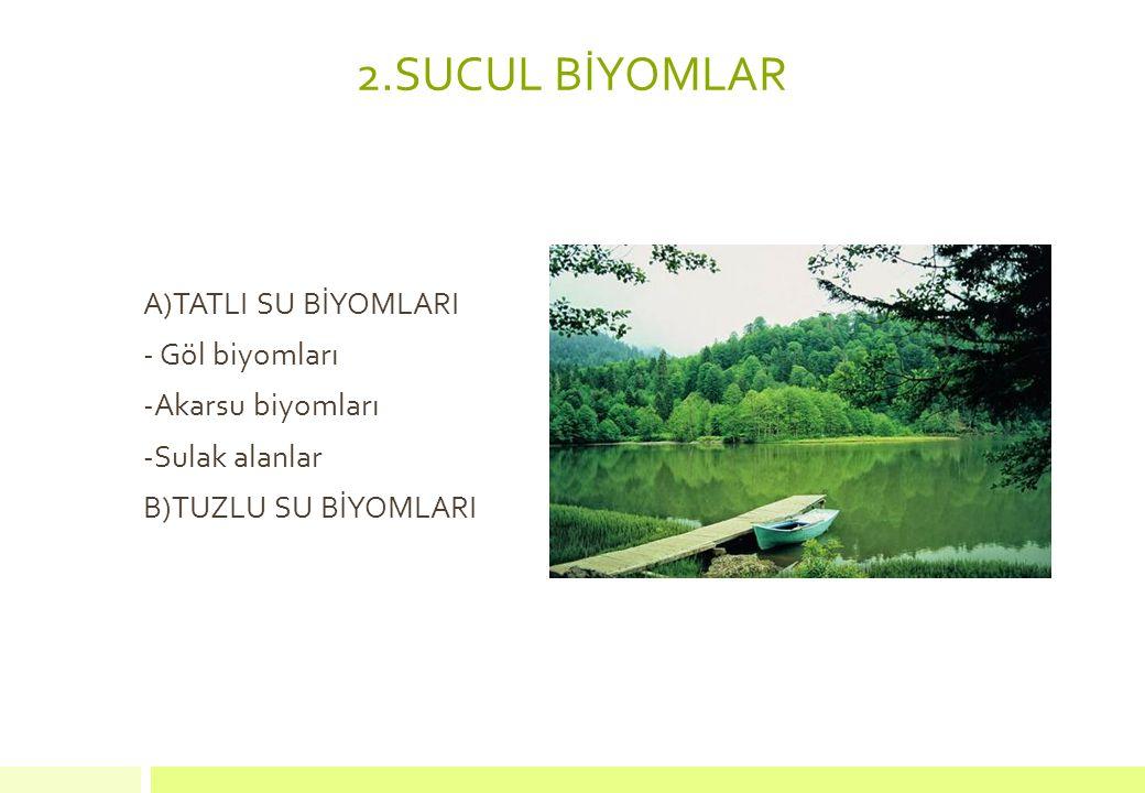 2.SUCUL BİYOMLAR A)TATLI SU BİYOMLARI - Göl biyomları -Akarsu biyomları -Sulak alanlar B)TUZLU SU BİYOMLARI