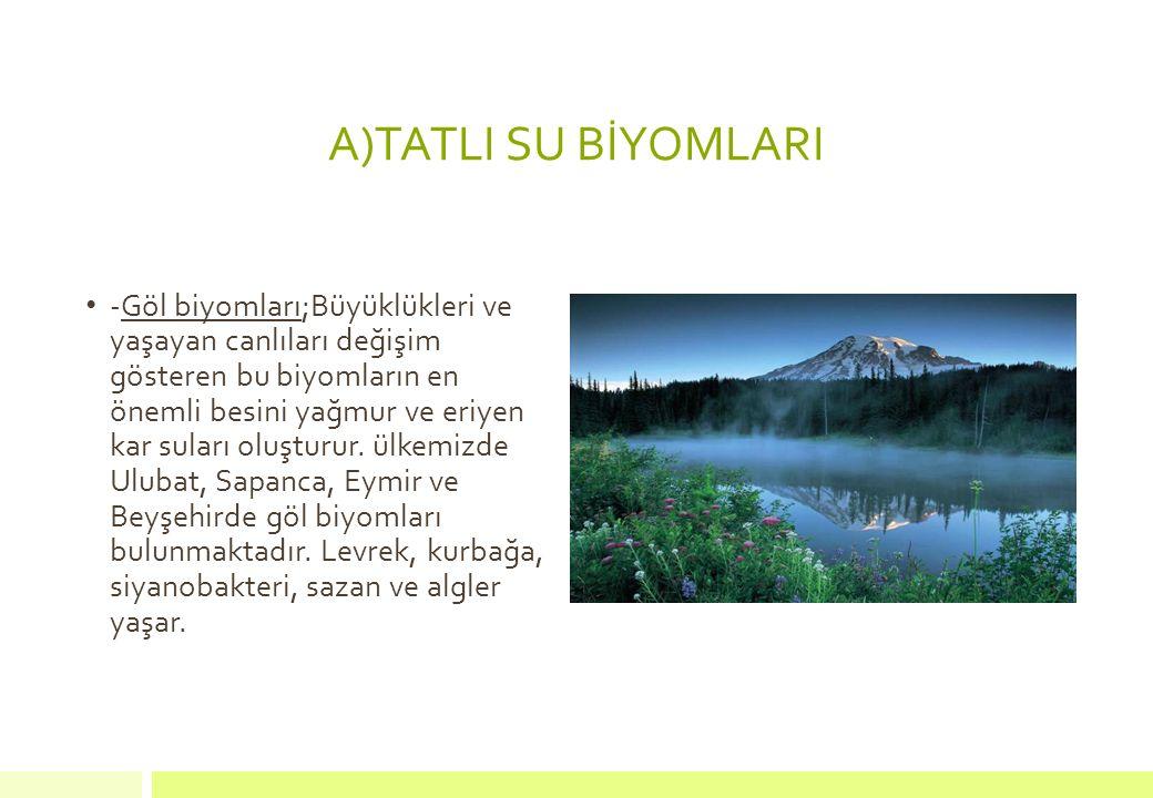 A)TATLI SU BİYOMLARI -Göl biyomları;Büyüklükleri ve yaşayan canlıları değişim gösteren bu biyomların en önemli besini yağmur ve eriyen kar suları oluş