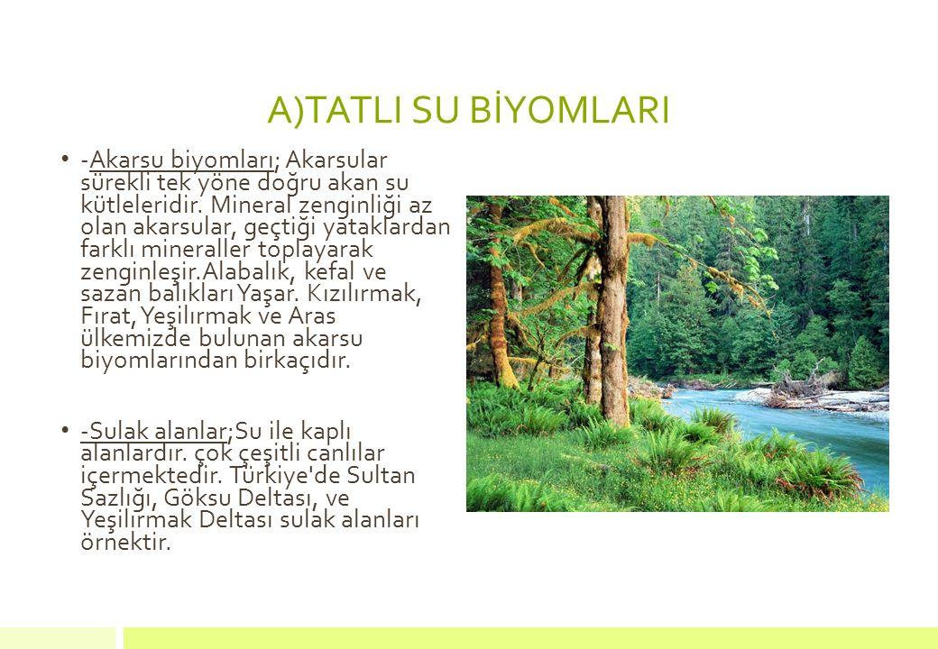 A)TATLI SU BİYOMLARI -Akarsu biyomları; Akarsular sürekli tek yöne doğru akan su kütleleridir. Mineral zenginliği az olan akarsular, geçtiği yataklard