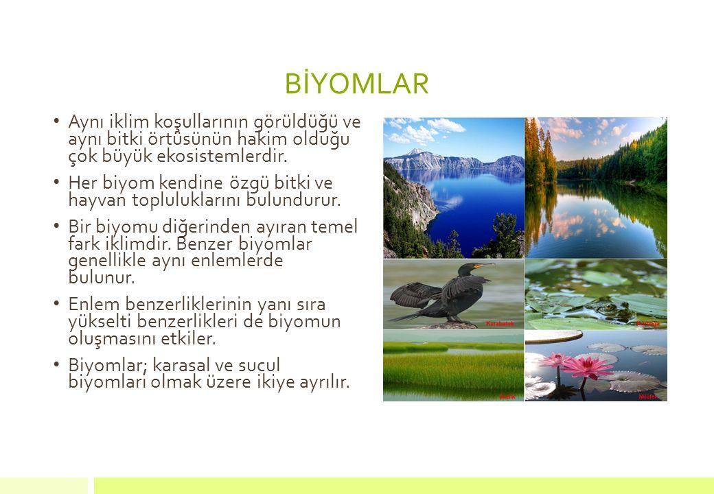 C) Çayır biyomları Karasal iklim bölgelerinde uzun boylu otlaklardan oluşmuş alanlardır.