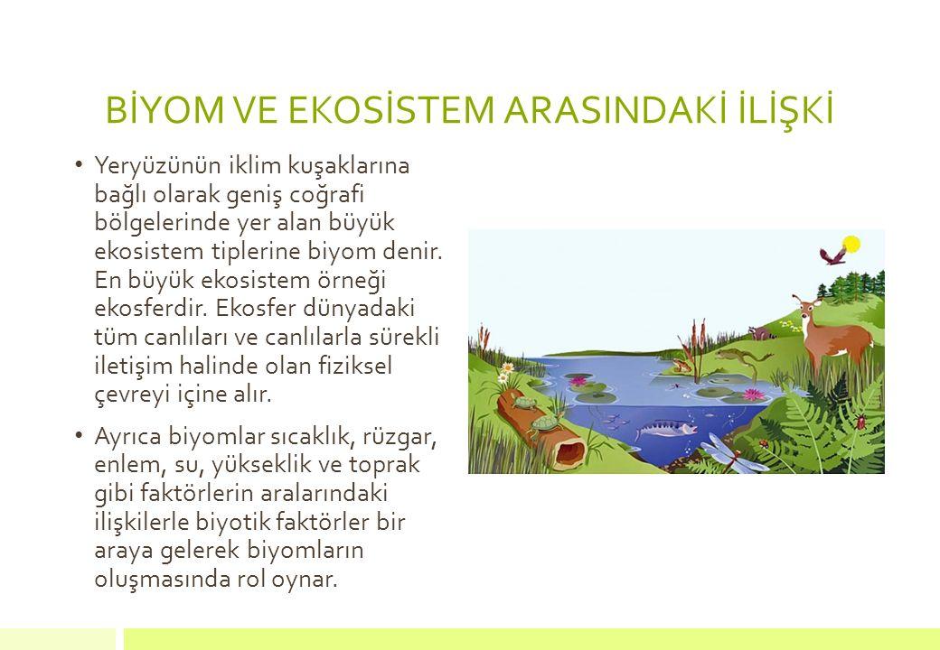 BİYOM VE EKOSİSTEM ARASINDAKİ İLİŞKİ Yeryüzünün iklim kuşaklarına bağlı olarak geniş coğrafi bölgelerinde yer alan büyük ekosistem tiplerine biyom den
