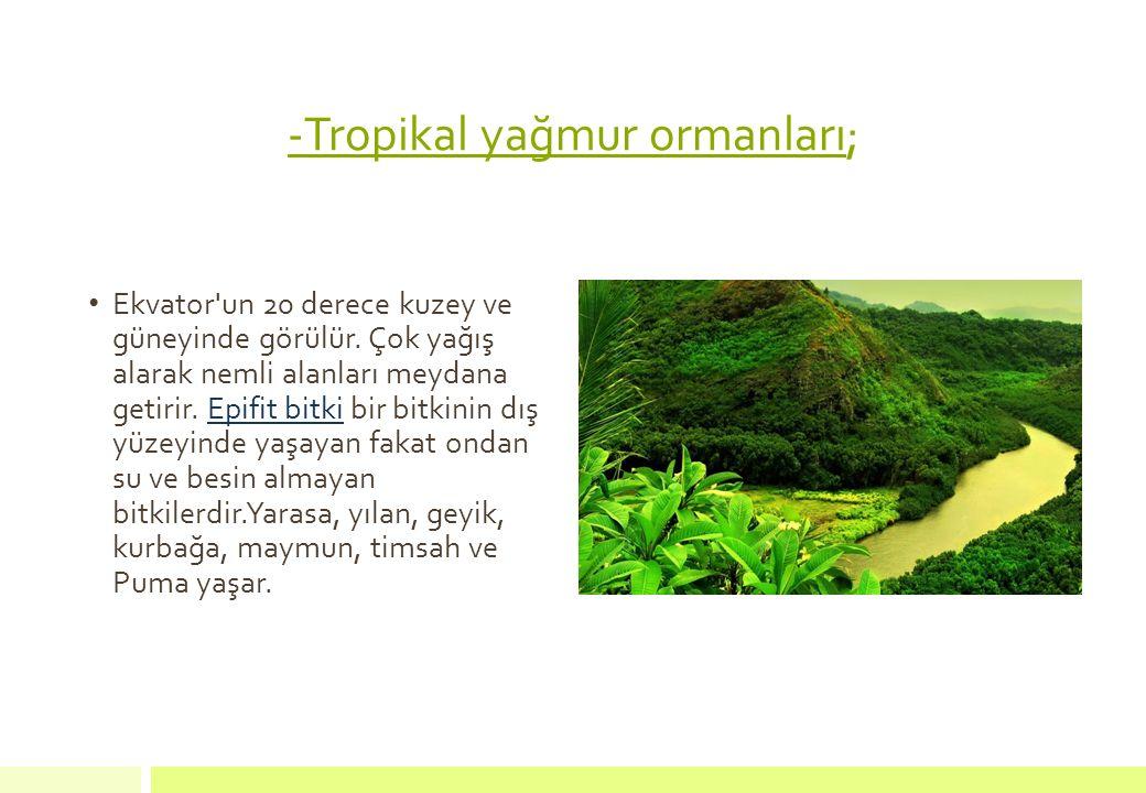-Tropikal yağmur ormanları; Ekvator'un 20 derece kuzey ve güneyinde görülür. Çok yağış alarak nemli alanları meydana getirir. Epifit bitki bir bitkini