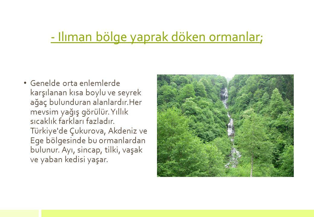 - Ilıman bölge yaprak döken ormanlar; Genelde orta enlemlerde karşılanan kısa boylu ve seyrek ağaç bulunduran alanlardır.Her mevsim yağış görülür. Yıl