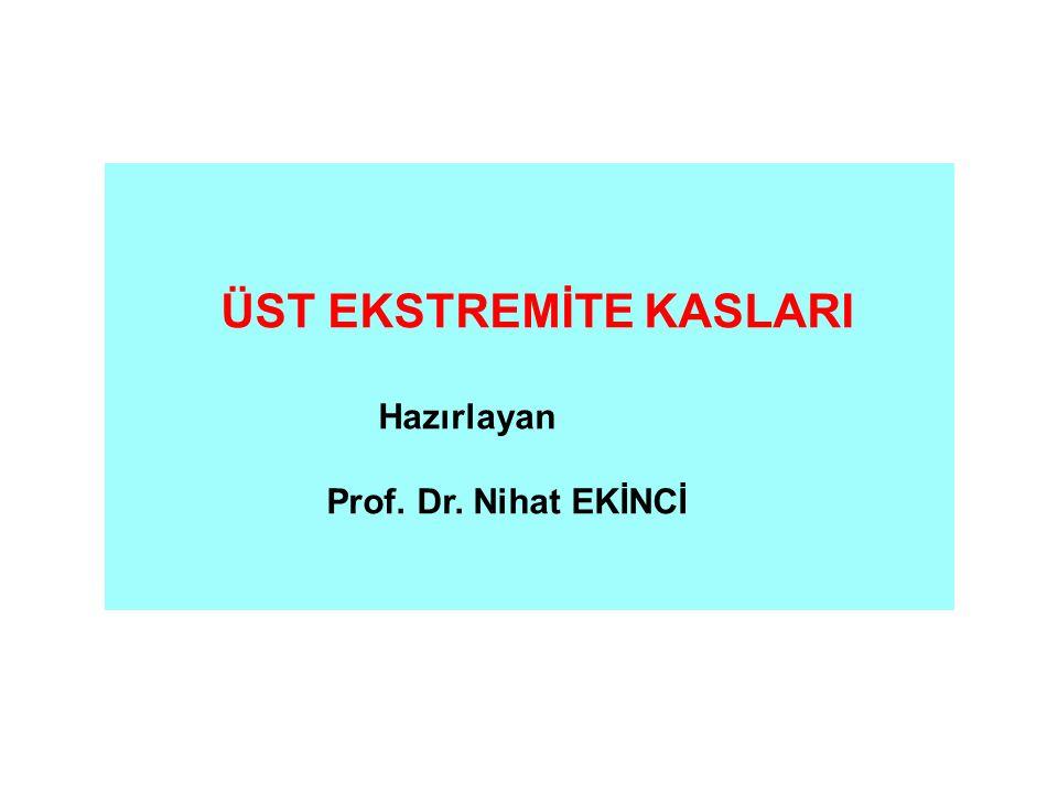 ÜST EKSTREMİTE KASLARI Hazırlayan Prof. Dr. Nihat EKİNCİ