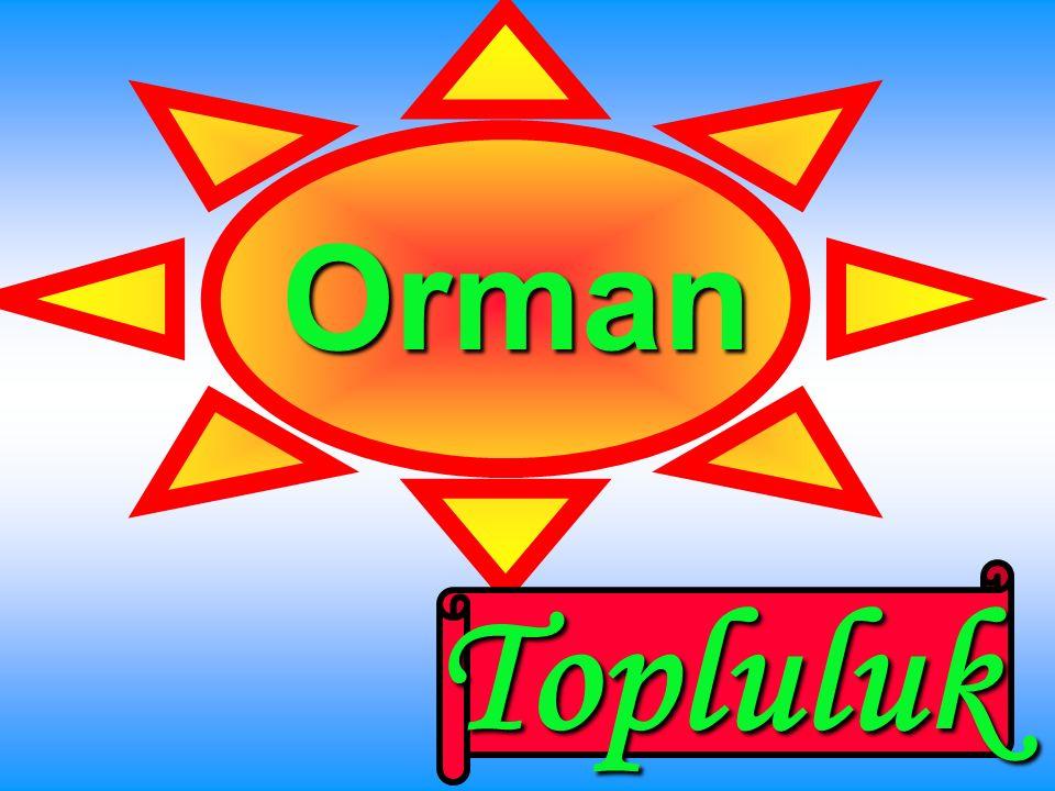Türkmen Tekil
