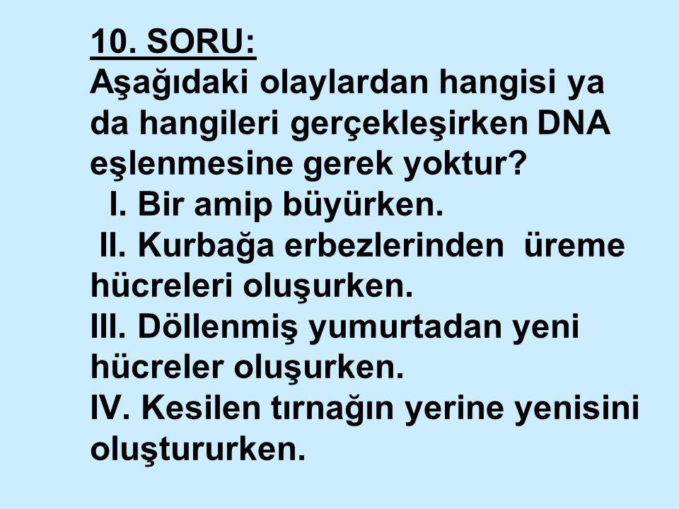 10. SORU: Aşağıdaki olaylardan hangisi ya da hangileri gerçekleşirken DNA eşlenmesine gerek yoktur.