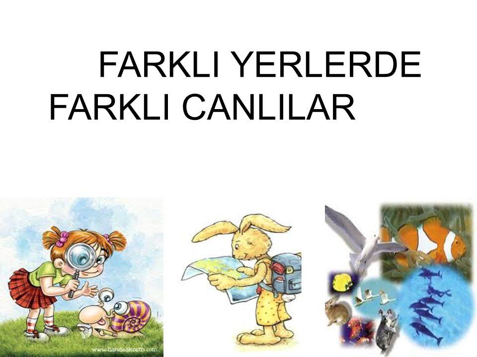 FARKLI YERLERDE FARKLI CANLILAR