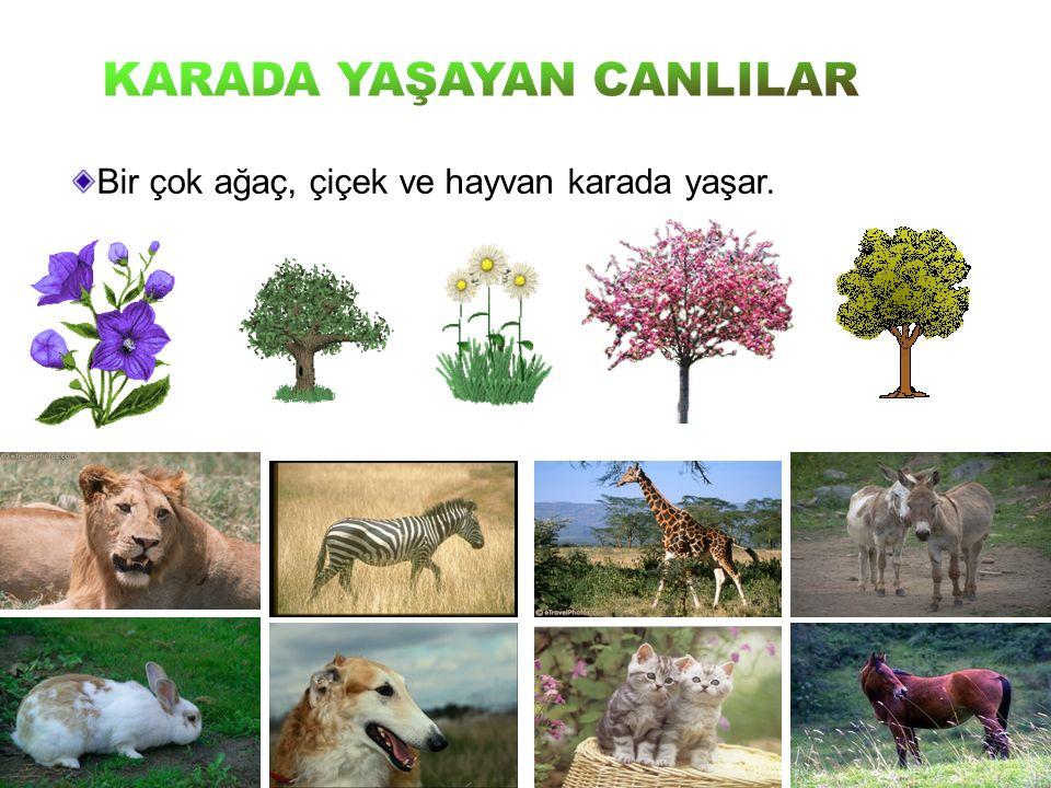 Bir çok ağaç, çiçek ve hayvan karada yaşar.