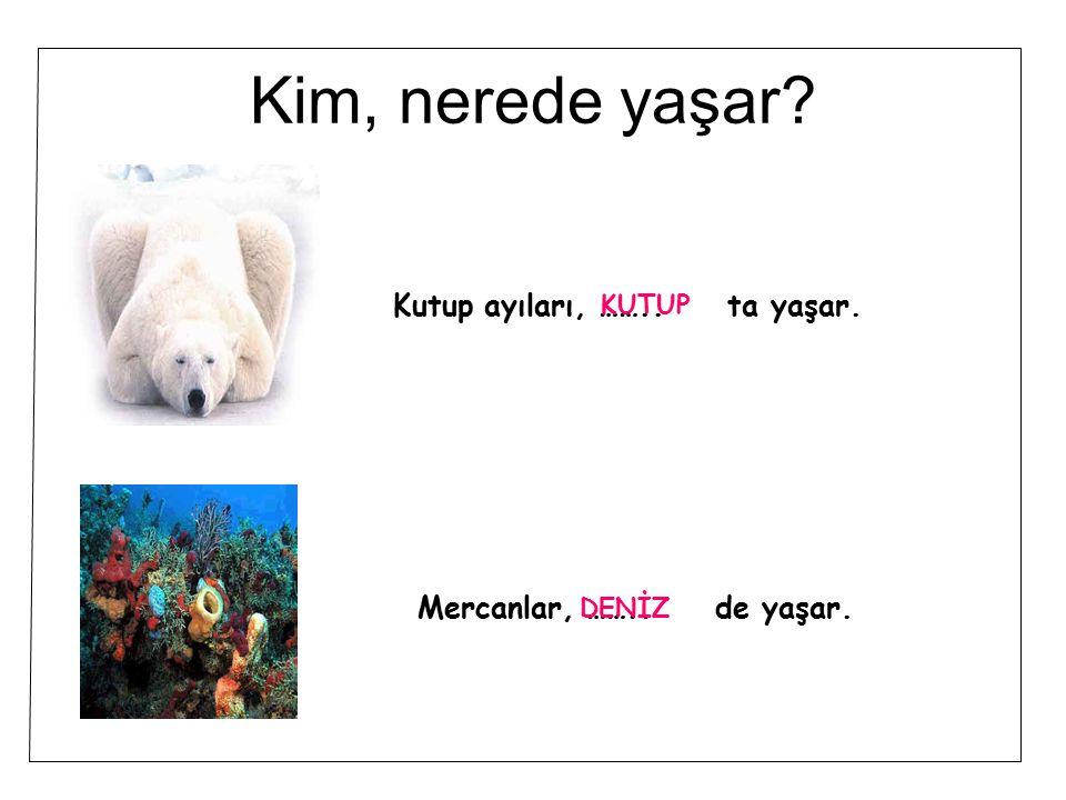 Kim, nerede yaşar? Kutup ayıları, …….. ta yaşar. Mercanlar, …….. de yaşar. KUTUP DENİZ