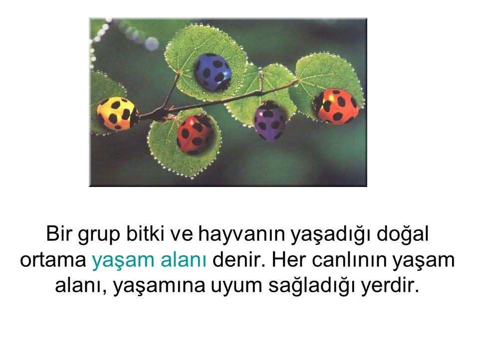 Bir grup bitki ve hayvanın yaşadığı doğal ortama yaşam alanı denir. Her canlının yaşam alanı, yaşamına uyum sağladığı yerdir.