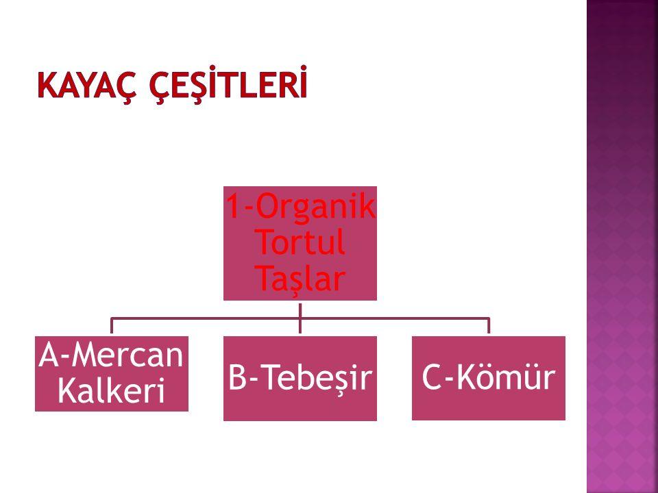 1-Organik Tortul Taşlar A-Mercan Kalkeri B-Tebeşir C-Kömür