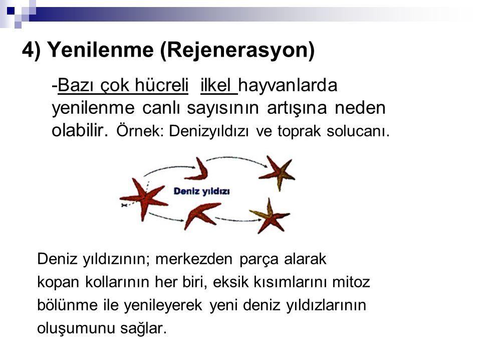 4) Yenilenme (Rejenerasyon)  -Bazı çok hücreli ilkel hayvanlarda yenilenme canlı sayısının artışına neden olabilir. Örnek: Denizyıldızı ve toprak sol