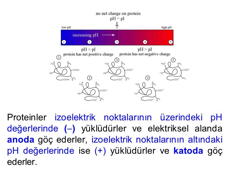 Proteinler izoelektrik noktalarının üzerindeki pH değerlerinde (  ) yüklüdürler ve elektriksel alanda anoda göç ederler, izoelektrik noktalarının altındaki pH değerlerinde ise (+) yüklüdürler ve katoda göç ederler.