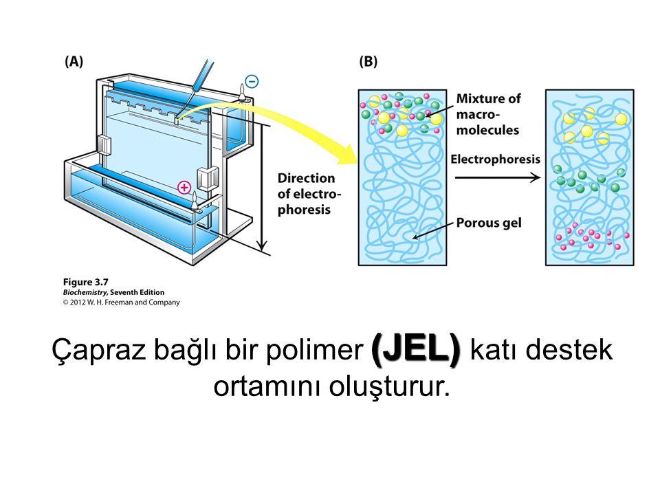 (JEL) Çapraz bağlı bir polimer (JEL) katı destek ortamını oluşturur.
