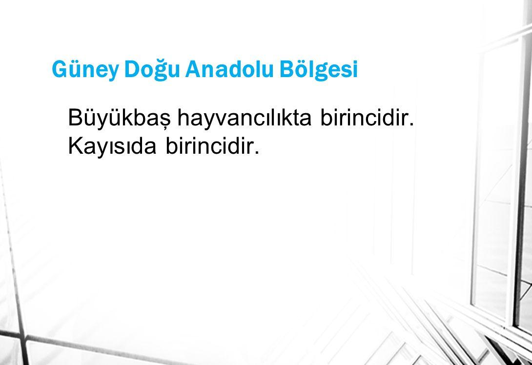 Güney Doğu Anadolu Bölgesi Büyükbaş hayvancılıkta birincidir. Kayısıda birincidir.