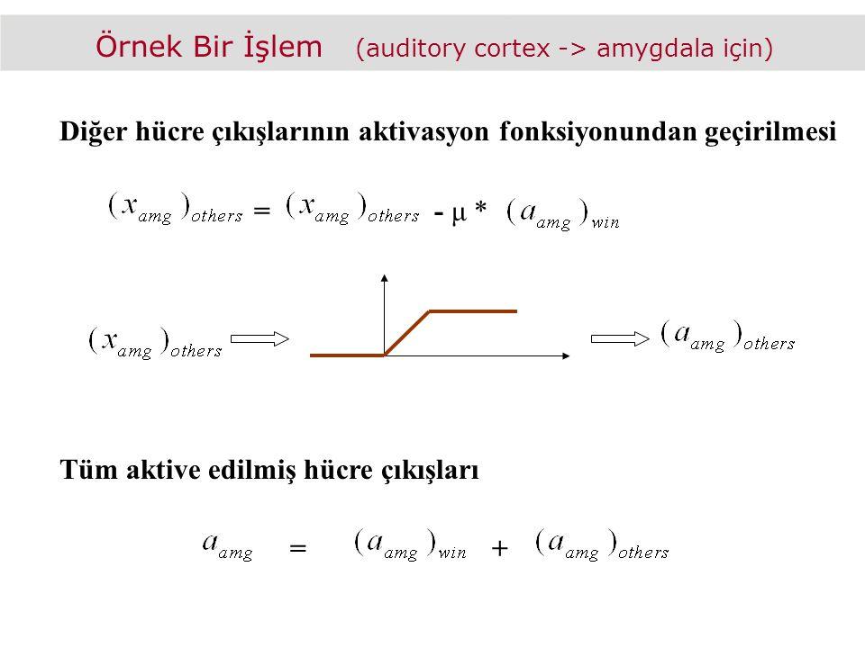 Örnek Bir İşlem (auditory cortex -> amygdala için) Diğer hücre çıkışlarının aktivasyon fonksiyonundan geçirilmesi =- μ * Tüm aktive edilmiş hücre çıkışları =+