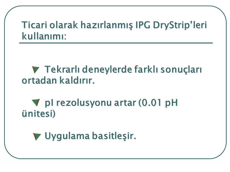 Ticari olarak hazırlanmış IPG DryStrip'leri kullanımı: Tekrarlı deneylerde farklı sonuçları ortadan kaldırır.